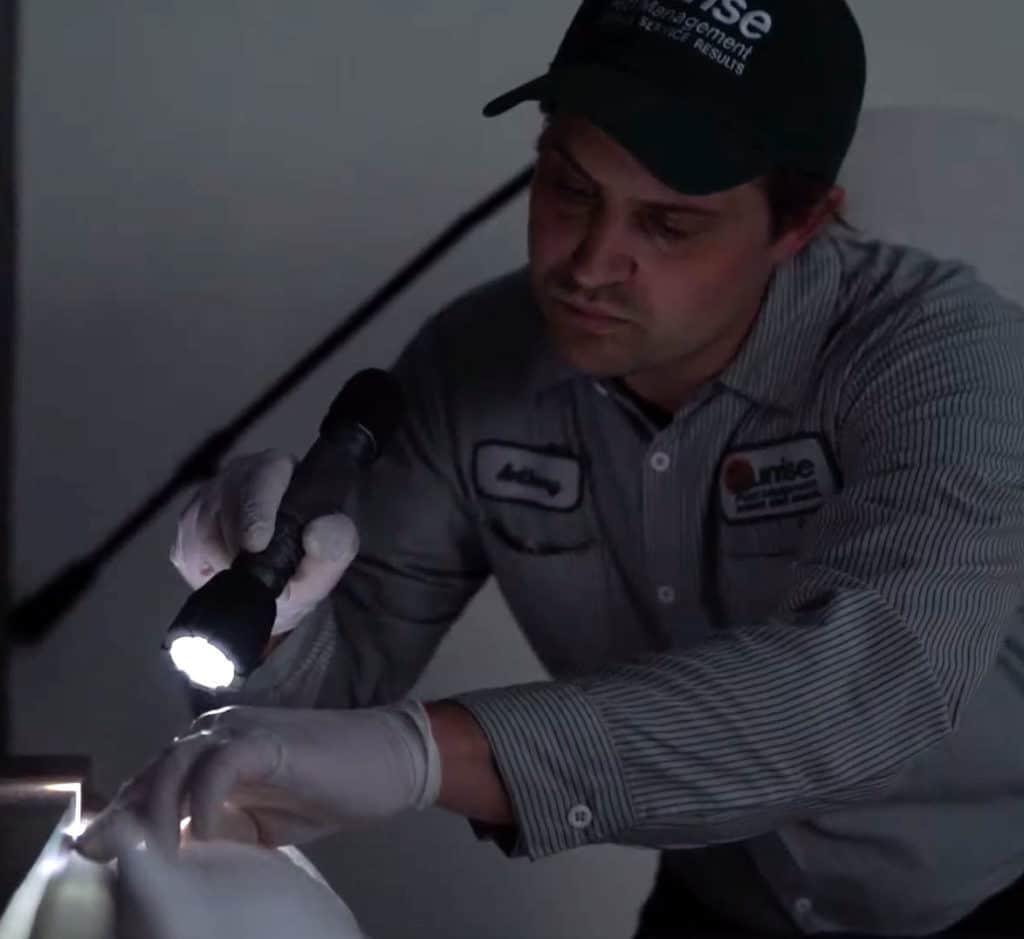 Best Pest Control Tech Bed Bug